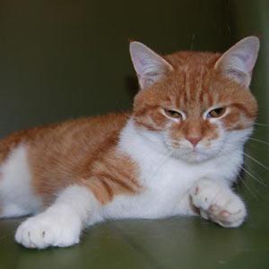 clippercat